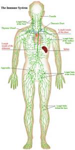 Lymphatic Support